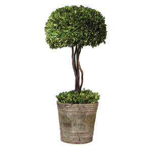 Preserved Boxwood Tree Topiary | The Uttermost Company