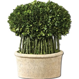 Preserved Boxwood Willow Topiary | The Uttermost Company