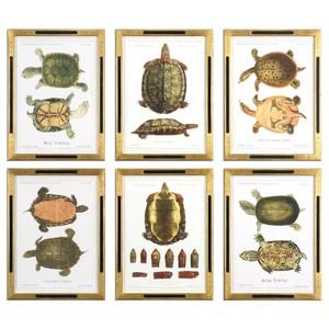 Tortoise Study Art