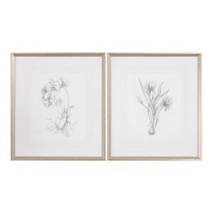 Botanical Sketches Art