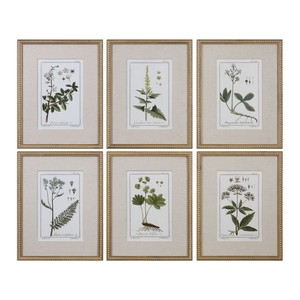 Green Floral Botanical Study Art | The Uttermost Company