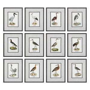 Seashore Birds Prints - Set of Twelve