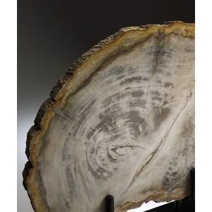Medium Petrified Wood on Stand   Cyan Design