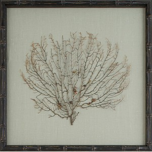 Natural Coral Sea Fan Art | Mirror Image Home