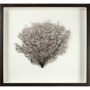 Large Natural Coral Sea Fan Art | Mirror Image Home