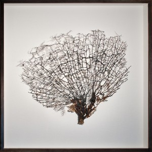 Giant Natural Coral Sea Fan Art | Mirror Image Home