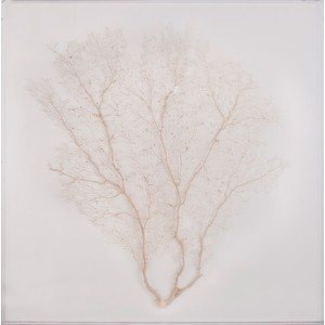 Acrylic Box Cream Sea Fan Art | Mirror Image Home
