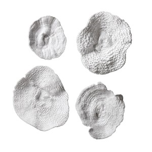 Sea Coral Wall Decor - Set of Four