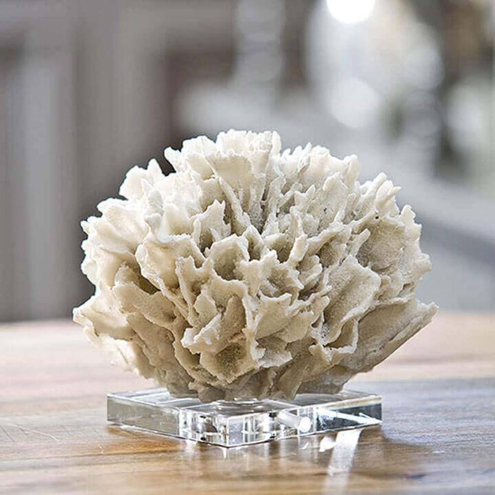 White Ribbon Coral on Crystal Base | Regina Andrew