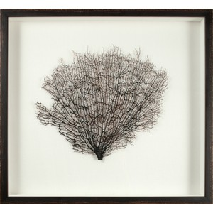 Large Natural Sea Fan | Mirror Image Home